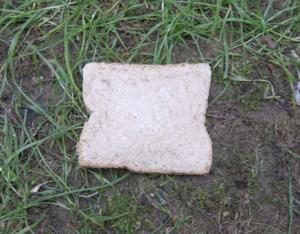 breadonearth