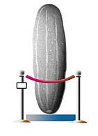 picklebehindrope